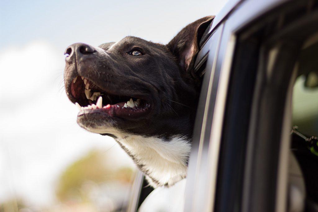 koiran kanssa matkustus