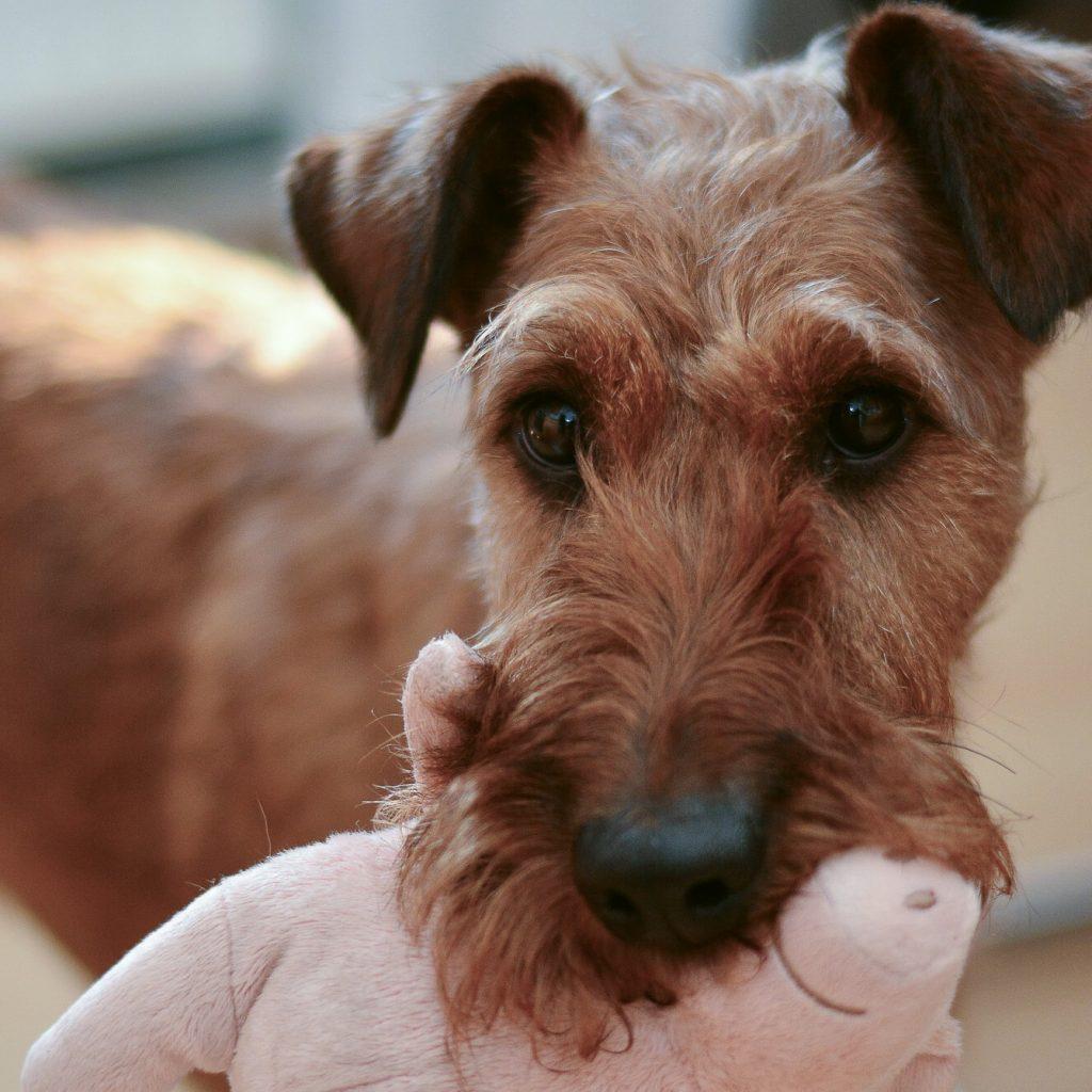 koiran rokotukset on syytä pitää ajan tasalla