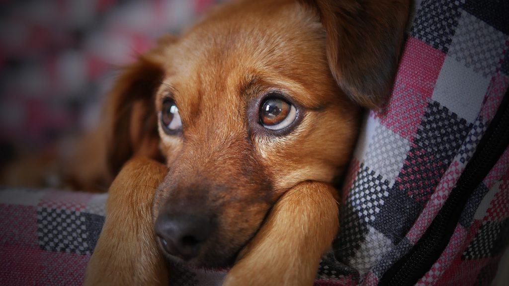 Koiran ripulin hoito