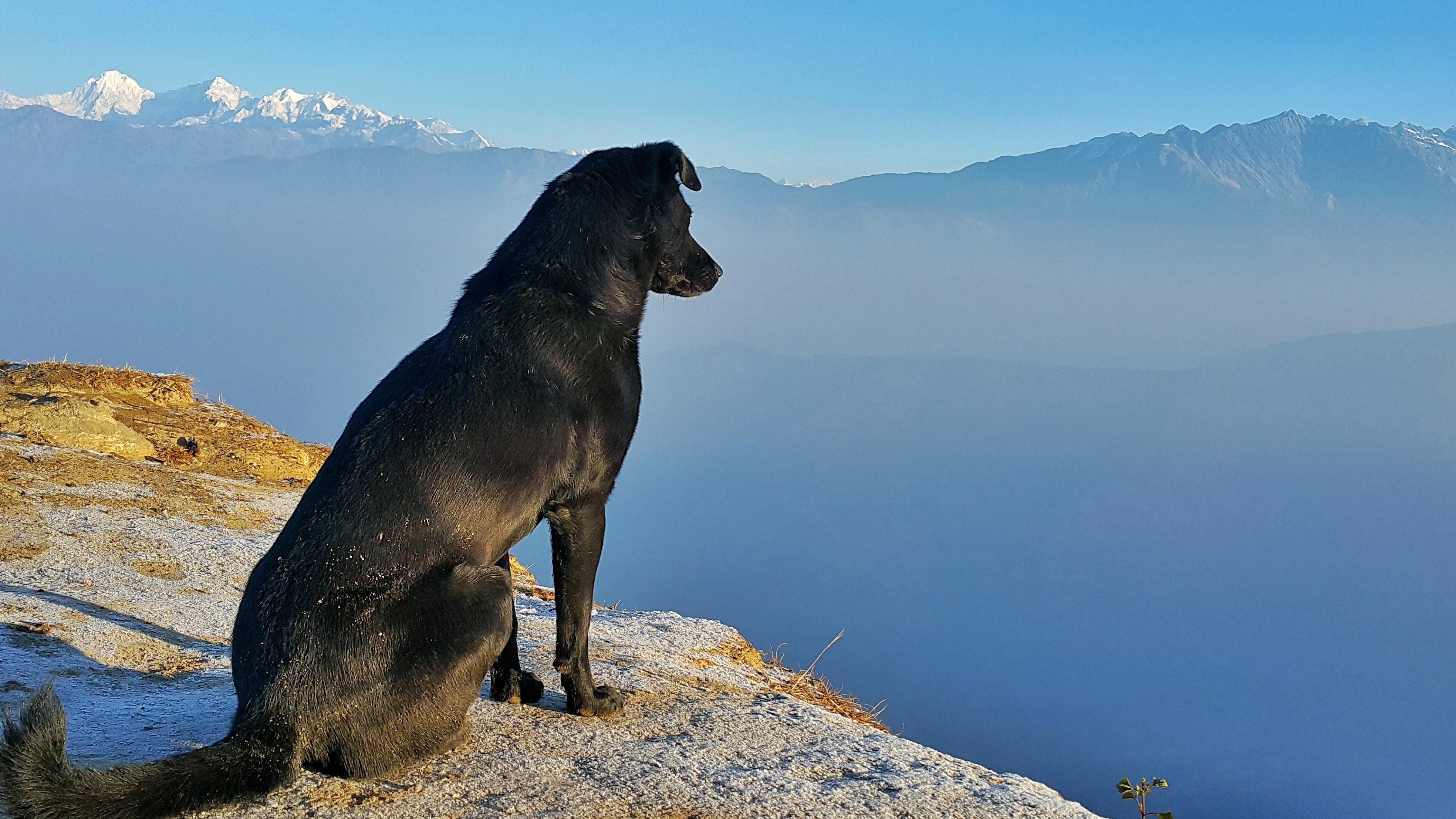ekinokokkilääkitys, heisimato, myyräekinokokki, koiran kanssa matkustaminen, matkustaminen Pohjoismaissa