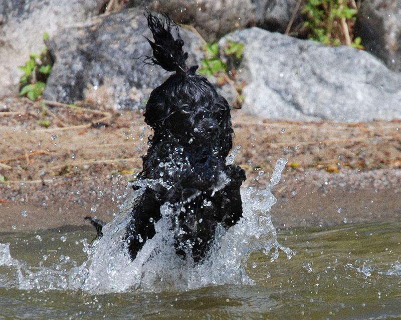 Koiran Uittaminen