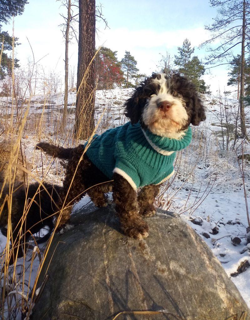 koiranpennun ulkoilutus ensilumi