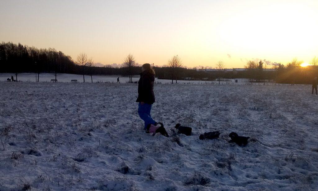 koiranpennun ulkoilutus pellolla