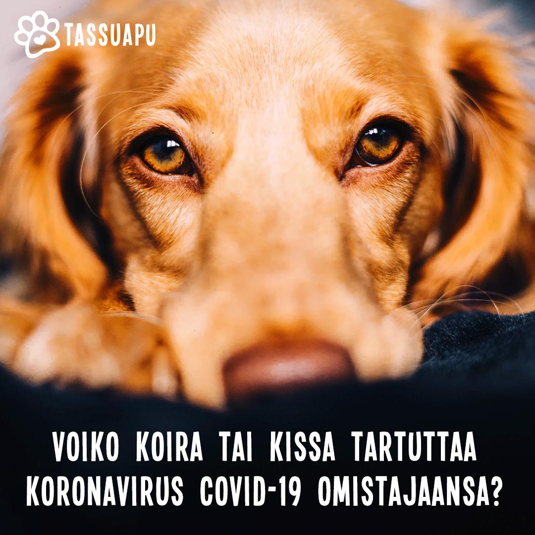 koronavirus kissa ja koira