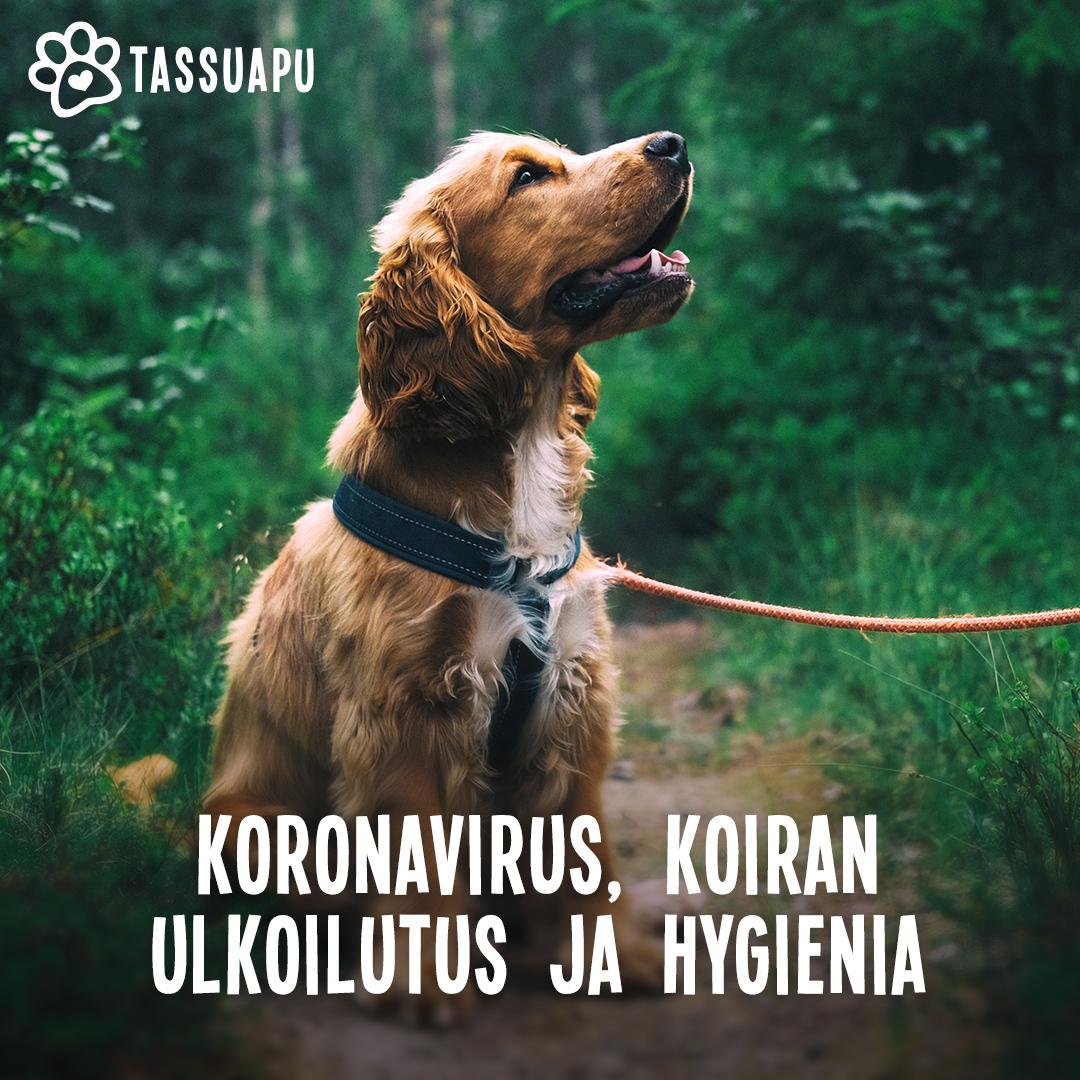 koronavirus koira