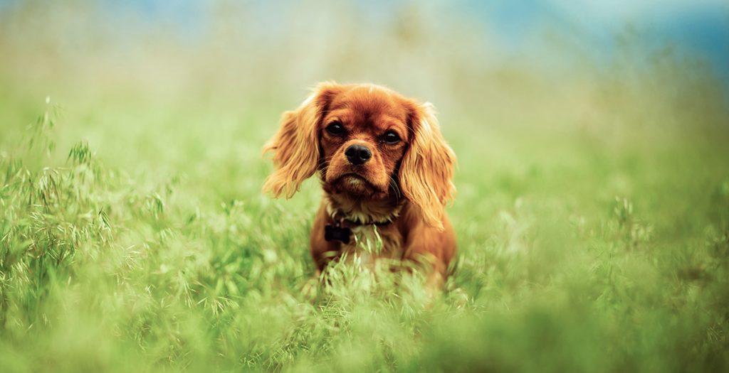 punkki koiralla punkin poisto koiralta