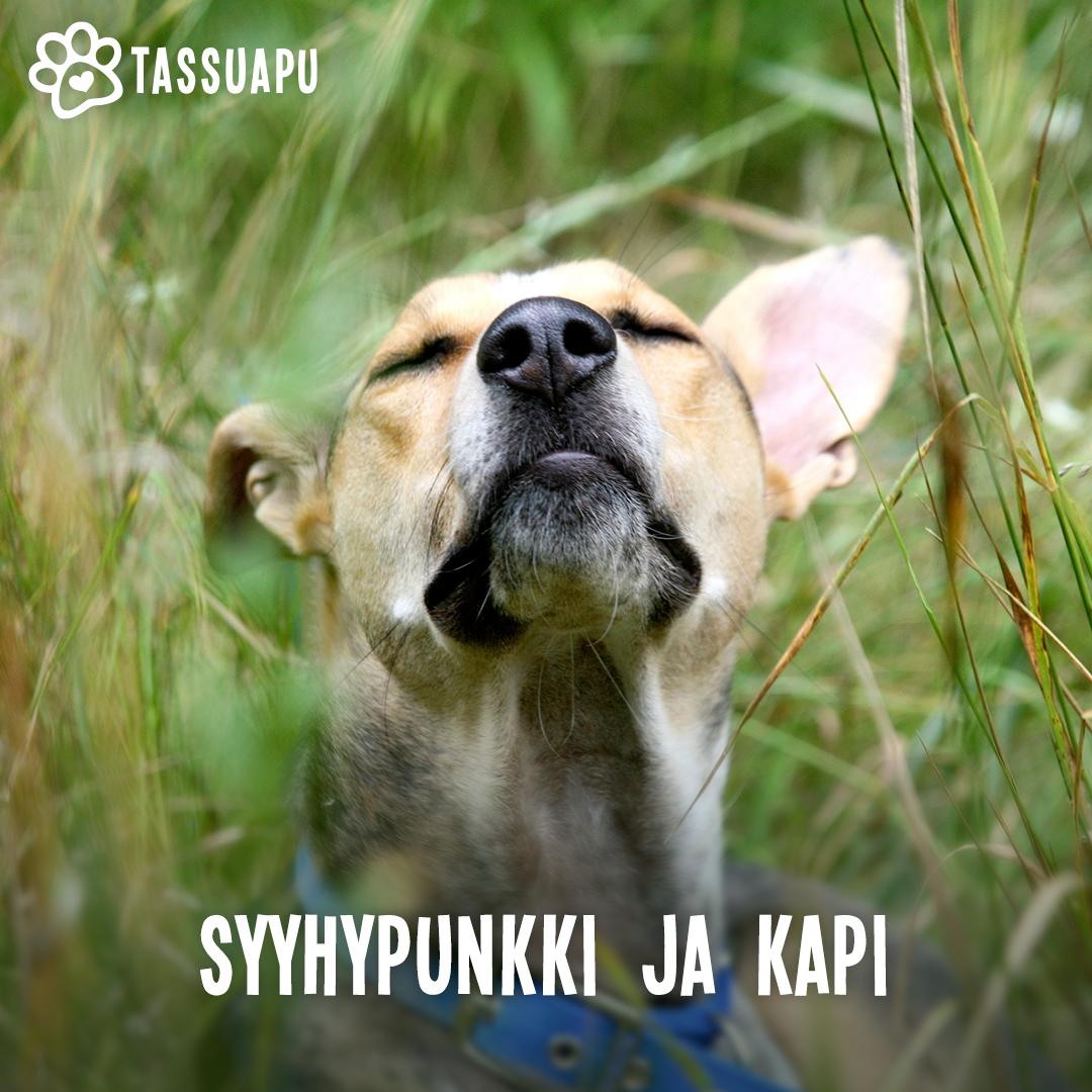 koiran syyhypunkki