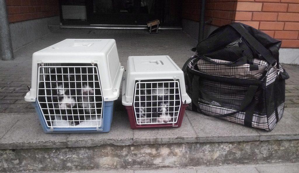 koiranpennut eläinlääkäriin matkalla