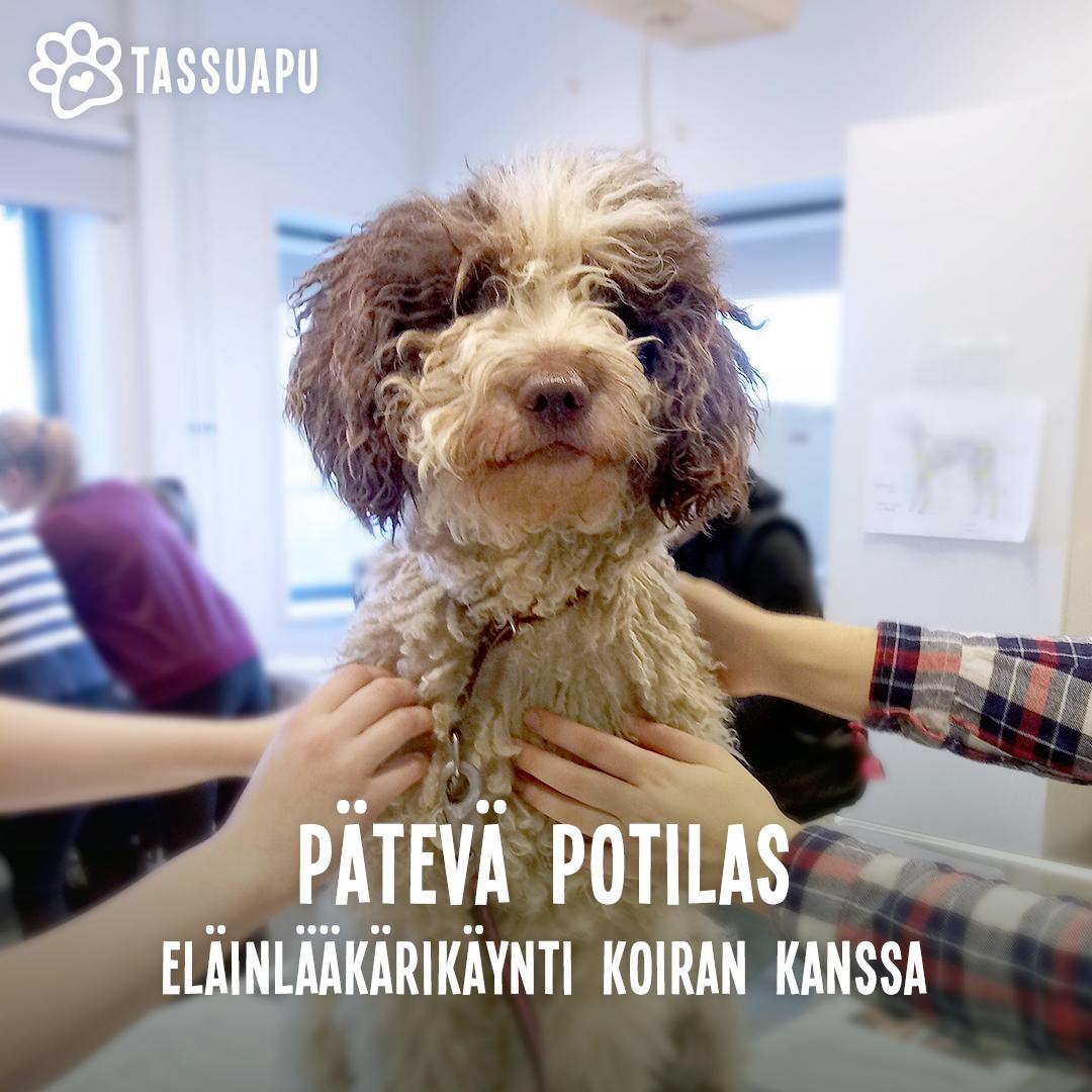 pätevä potilas: eläinlääkärikäynti koiran kanssa