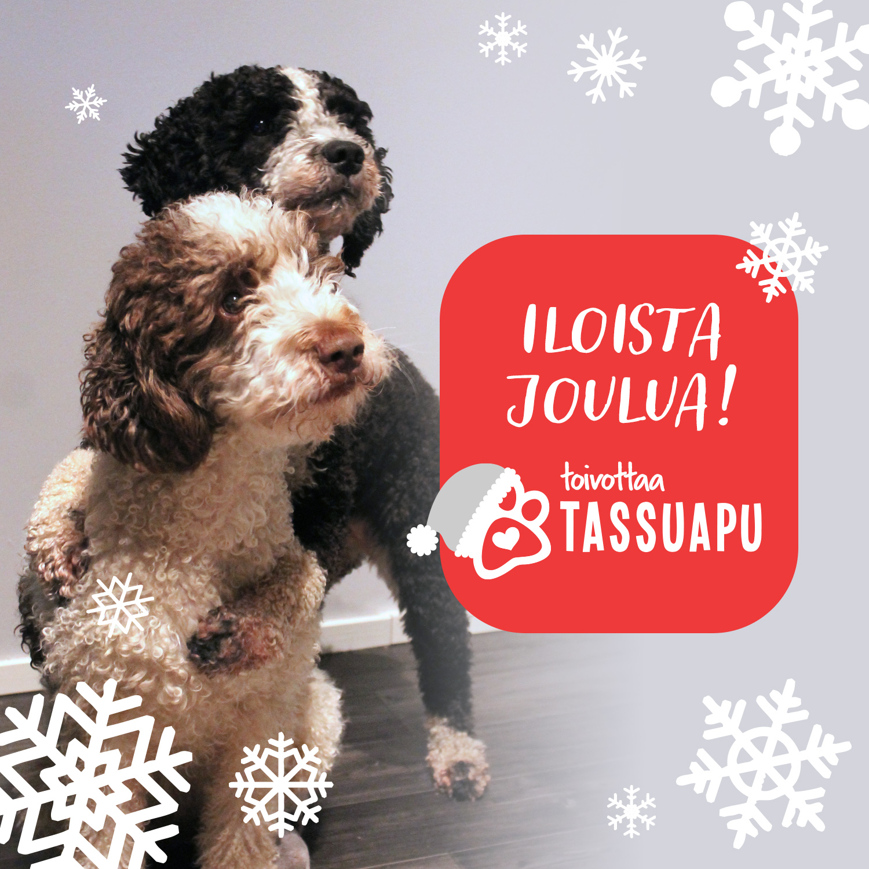 hyvää joulua koiran kanssa