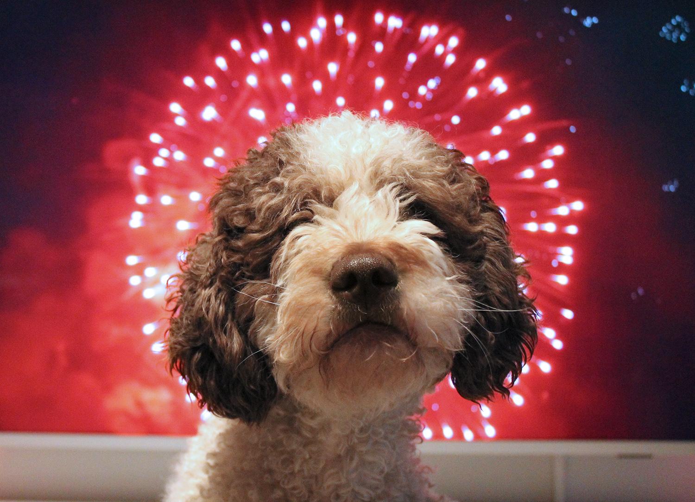 koira, joulu ja raketit