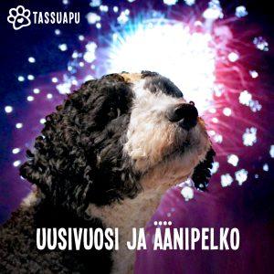 koiran uusivuosi