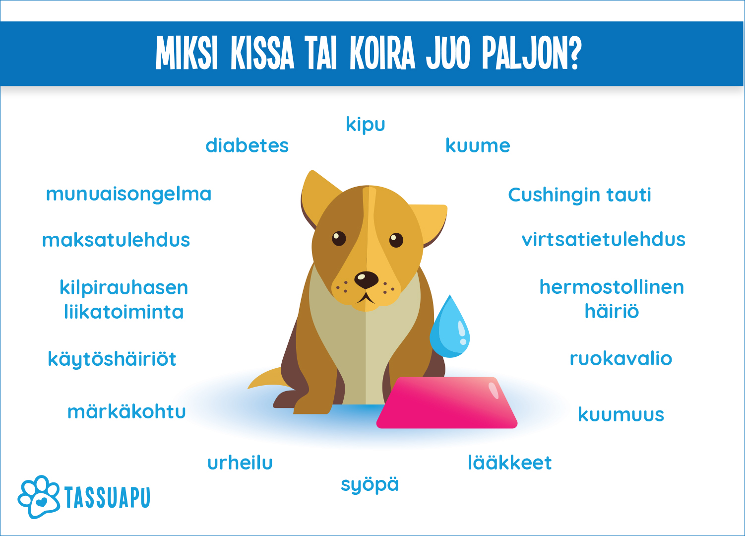 Koira Juo Paljon Vettä