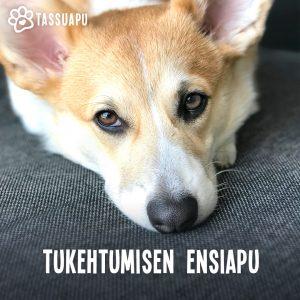 koiran tukehtuminen