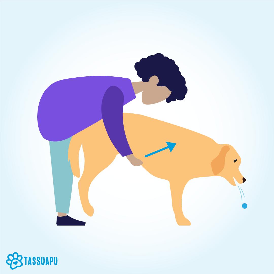koiran tukehtuminen heimlichin ote