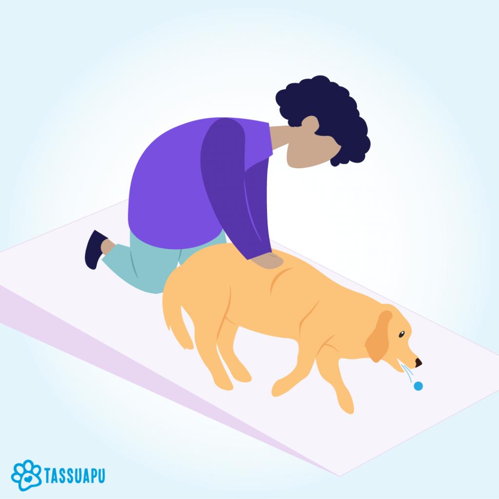 koiran tukehtuminen painelu kylkikaaren takaa