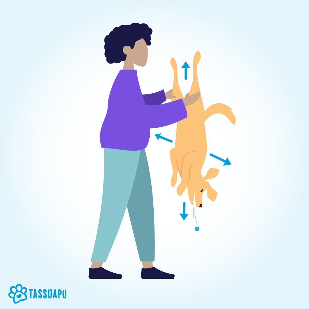 kun koira tukehtuu voit ravistaa koiraa