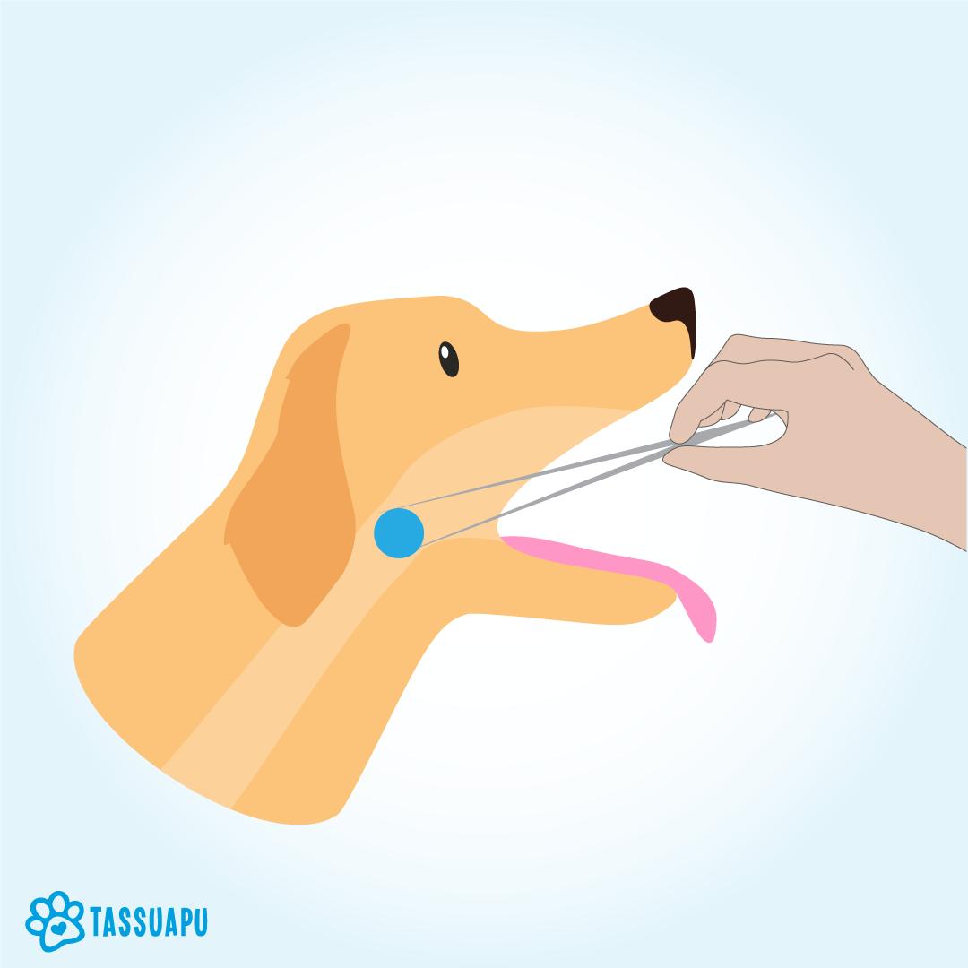 koiran tukehtuminen tukoksen poisto pinseteillä