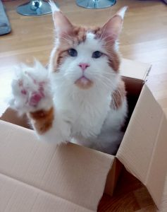 kissan aktivointi pahvilaatikko