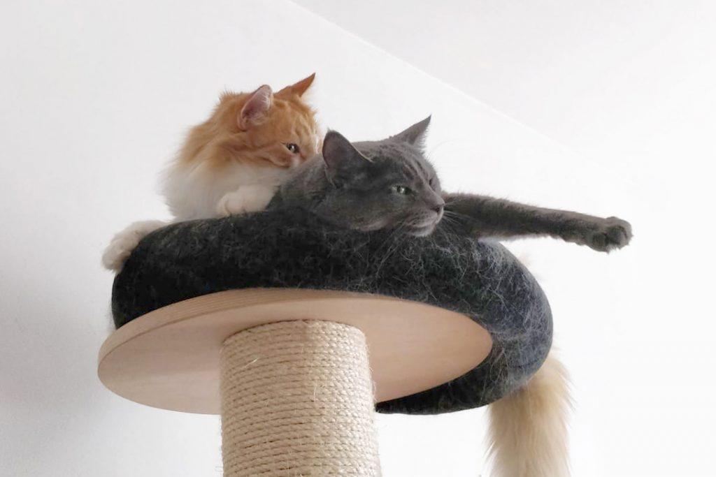 kissan aktivointi raapimispuu