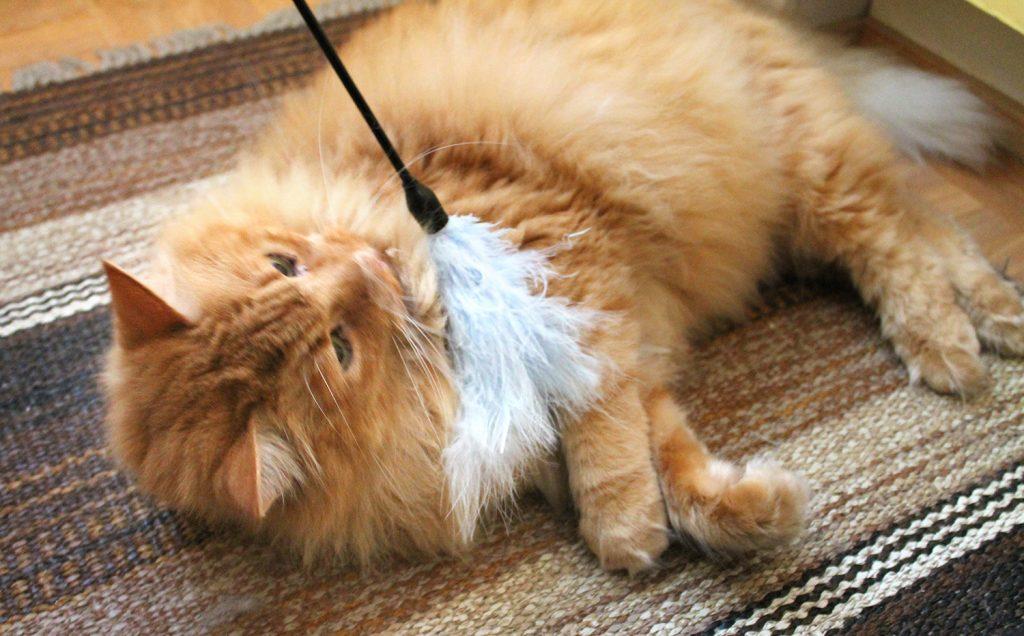 kissan aktivointi saalislelulla