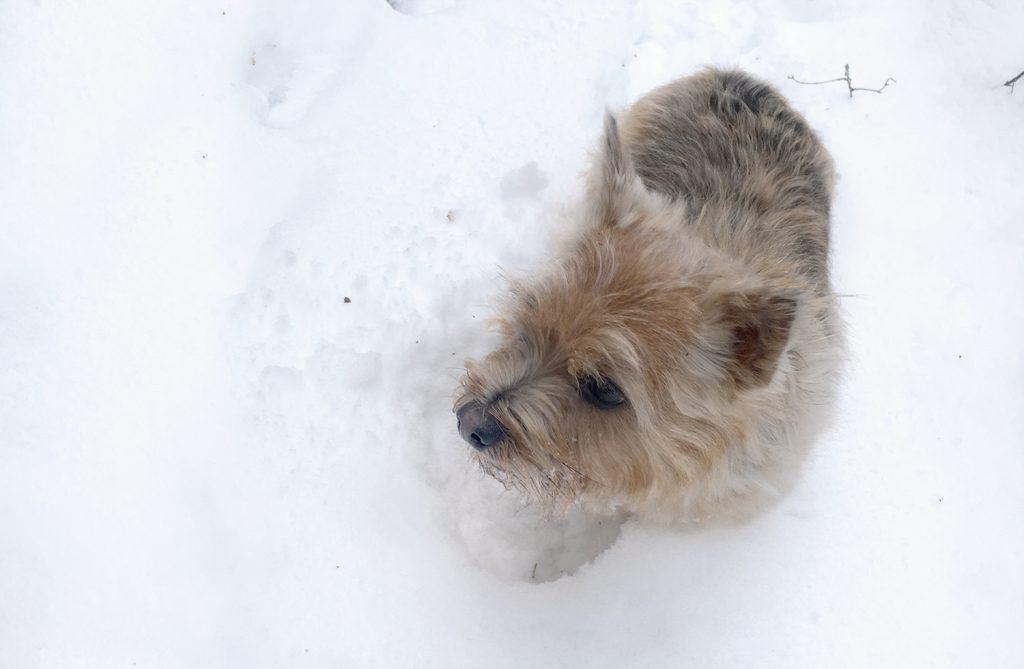 koiran paleltuma eläinlääkäriin