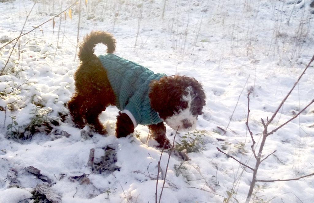 koiran paleltuma hoito