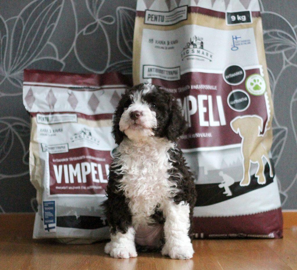 Koiranpentu istuu Dagsmark Vimpeli -koiranruokapussien edessä.