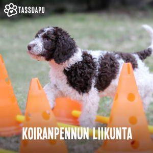 koiranpennun liikunta